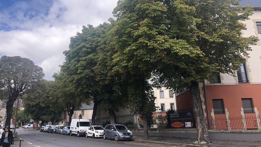 Les marronniers du boulevard du Général-de-Gaulle seront abattus./Photo MCB