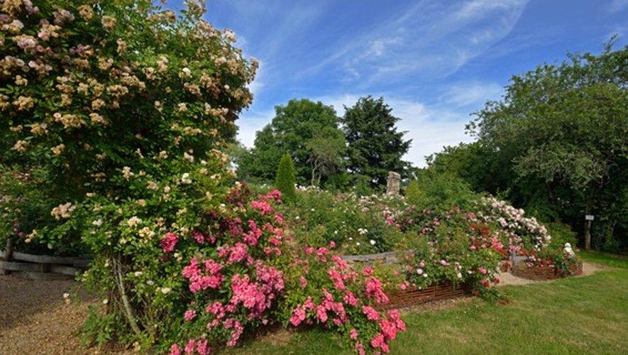 La roseraie figure parmi les beautés à voir pour agrémenter la journée.