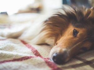 """La Fondation 30 millions d'amis a réclamé lundi un statut de """"personne animale"""" dans le Code civil pour mieux défendre et protéger les animaux"""