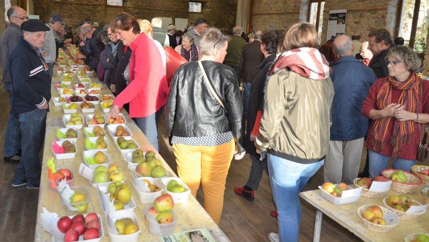 De nombreux fruits seront exposwées et des explications sur les caractéristiques de chaque variété seront données aux nombreux visiteurs.