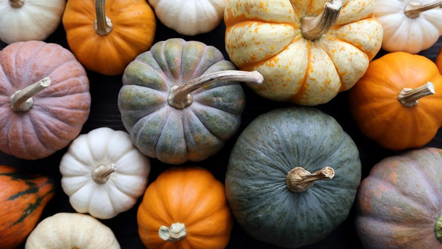Halloween : attention aux courges toxiques !