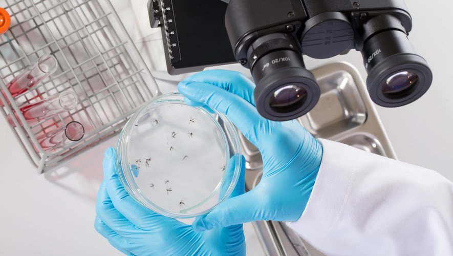 Contre le zika, la dengue… stériliser les moustiques