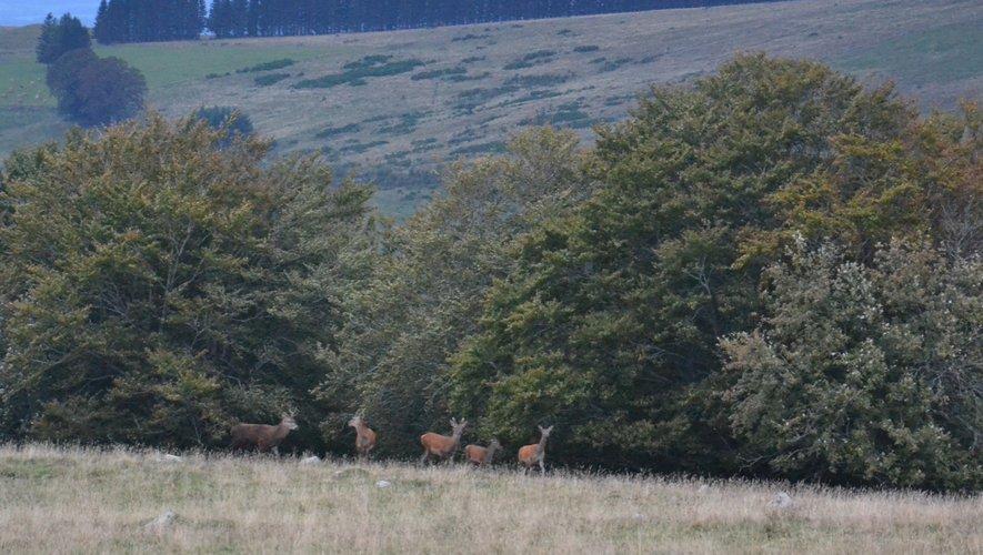 L'Aubrac compte encore parmi les zones relativement préservées.