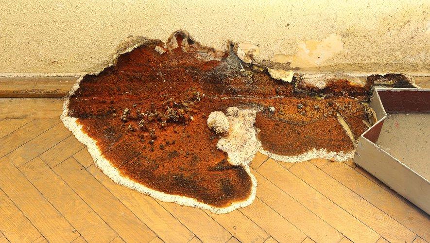 L'acquéreur d'une maison peut obtenir une indemnisation s'il n'est pas informé qu'elle a été autrefois attaquée par la mérule, et cela même si ce champignon a été traité et détruit.