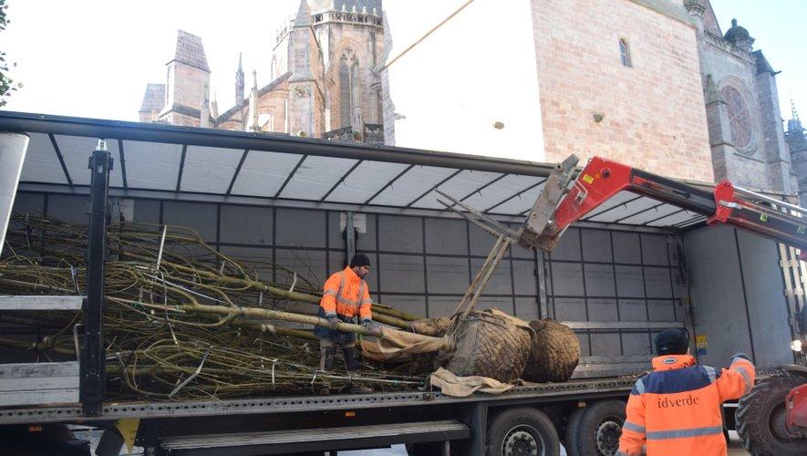 Les 12 arbres - des Sophora du Japon - sont arrivés ce mercredi matin, en camion.