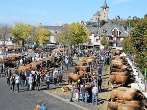 La place du Taureau à Laguiole accueillera une fois encore les beaux spécimens de la race aubrac.