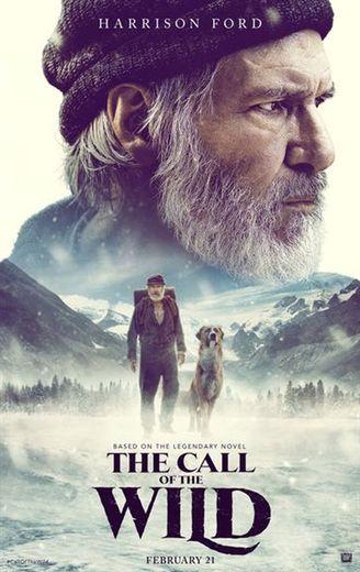 """""""The Call of the Wind"""" de Chris Sanders avec Harrison Ford et Omar Sy sortira le 21 février 2020 aux Etats-Unis."""