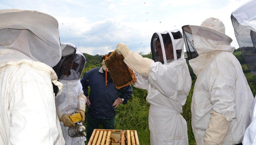 Les ruchers école font le plein.