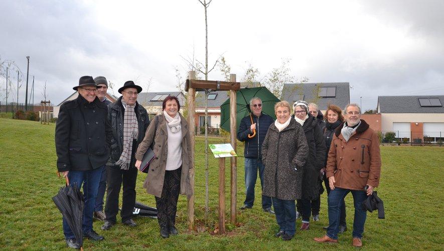 L'arbre a été planté dans le parc.