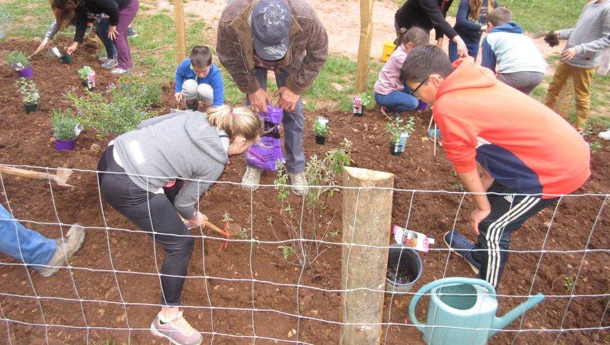 Les enfants mettent en place des plantes mellifères. dans le canyon.