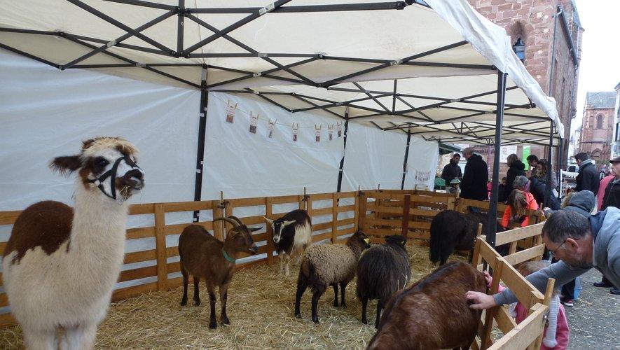 La mini ferme des Bornottes sur la place du Marché.