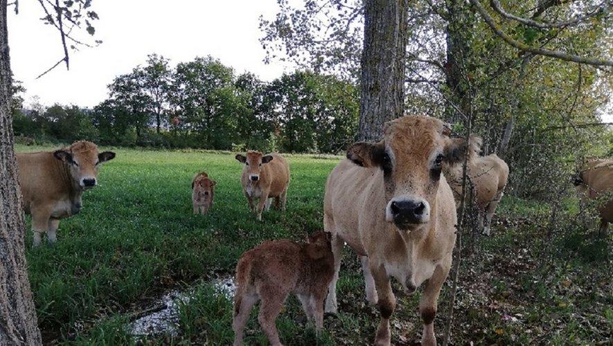 La petite Plaine est née sur Notre Seigne.