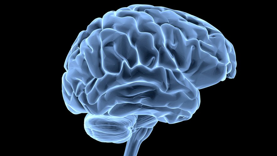 """L'intelligence artificielle peut permettre une analyse """"presque en temps réel"""" d'une tumeur au cerveau lors de l'opération d'un patient"""