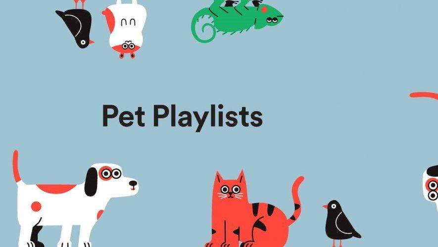 Spotify pense que votre animal de compagnie aime la musique.
