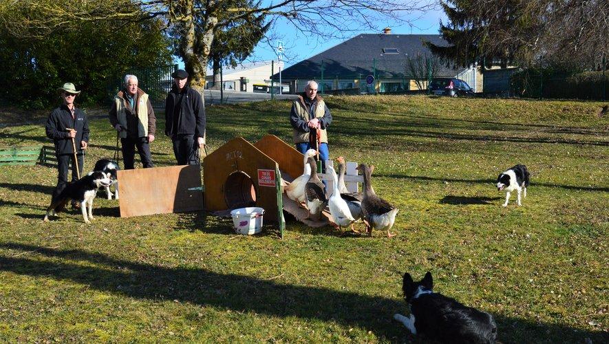 L'association des chiens de berger de l'Aveyron.