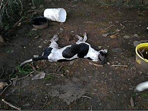 Laguiole Les gendarmes découvrent  le cadavre d'un chien