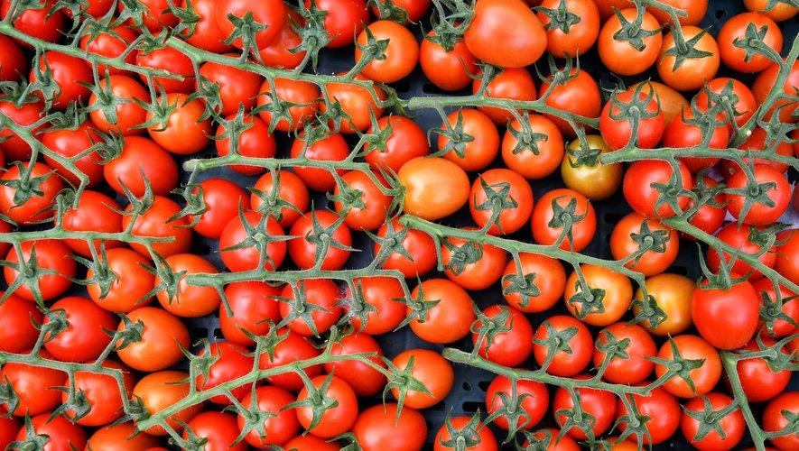 L'Agence de sécurité sanitaire (Anses) met en garde contre un nouveau virus s'attaquant aux cultures des tomates, piments et poivrons.