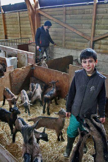 Une production bio et locale de fromages de chèvre