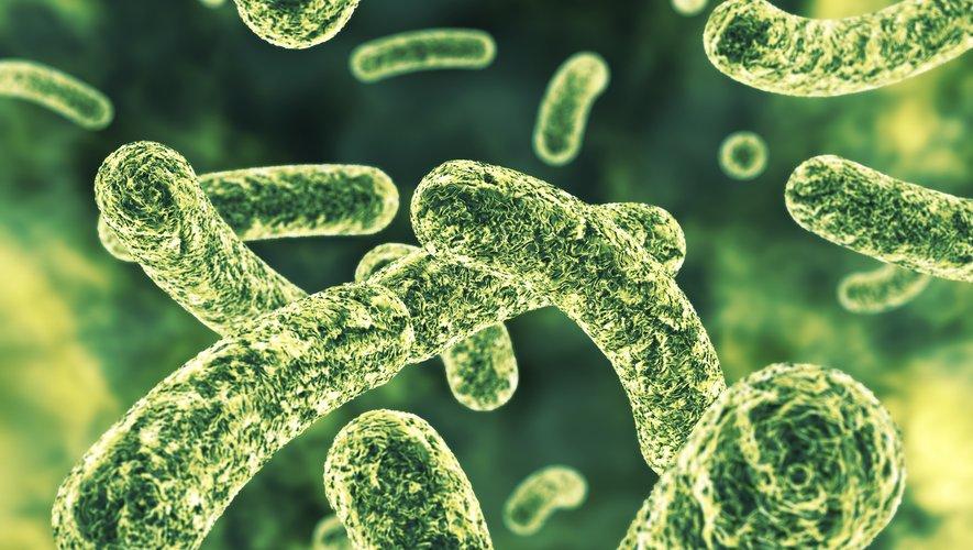 Des chercheurs du MIT et d'Harvard ont découvert grâce à un algorithme d'intelligence artificielle une nouvelle molécule antibiotique capable de tuer des bactéries résistantes aux antibiotiques traditionnels.