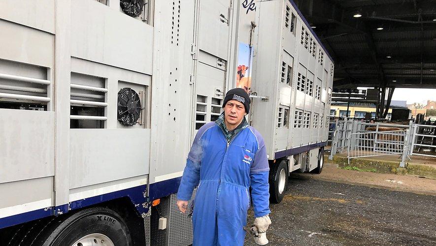 Le chauffeur italien des transports Gasparello, prêt à charger ses broutards.