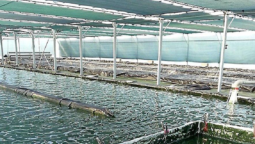 Une ferme aquacole, c'est ça…