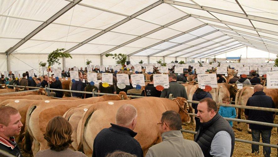 Le maintien de l'expo-vente de bœufs sera décidé lundi 16 mars.