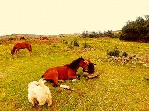 En attendant son rapatriement, Lola est retournée à Chucuito, auprès des chevaux.