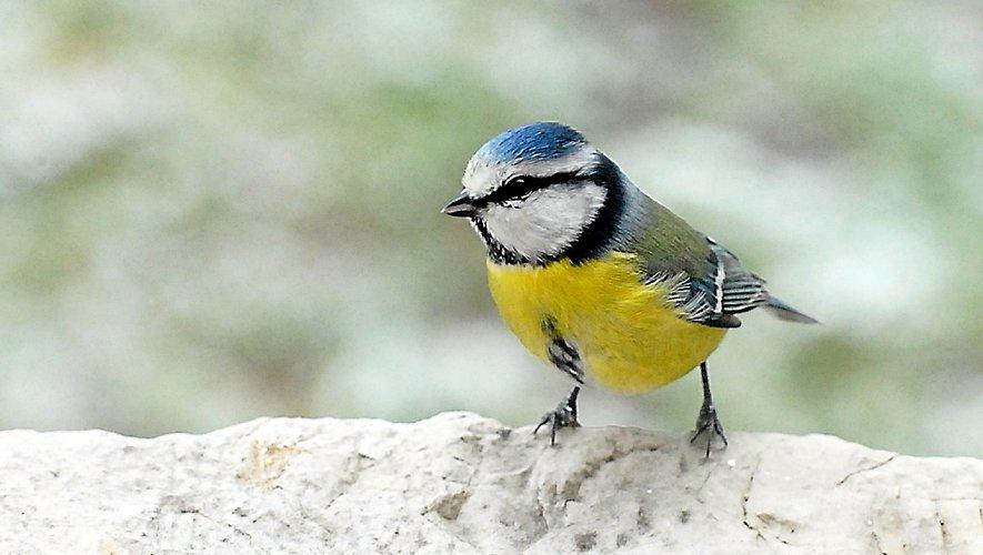 Il y a sûrement un oiseau près de chez vous qui chante…