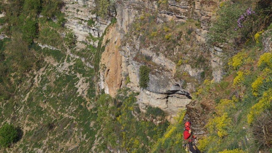 Bozouls Dans le canyon, une chèvre téméraire sauvée par le Grimp