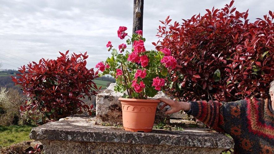 Deux habitants du hameau installent leurs pots fleuris devant la croix, en attendant de pouvoir semer des graines de fleurs au pied du socle, comme ils ont l'habitude de le faire.