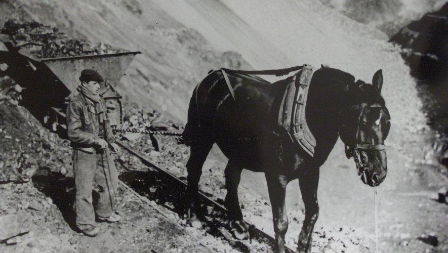 Un cheval de trait tire un wagonnet sur la Découverte.