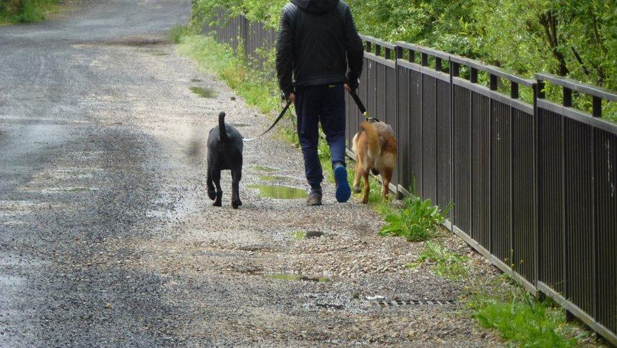 Les déjections canines s'accumulent en ville.