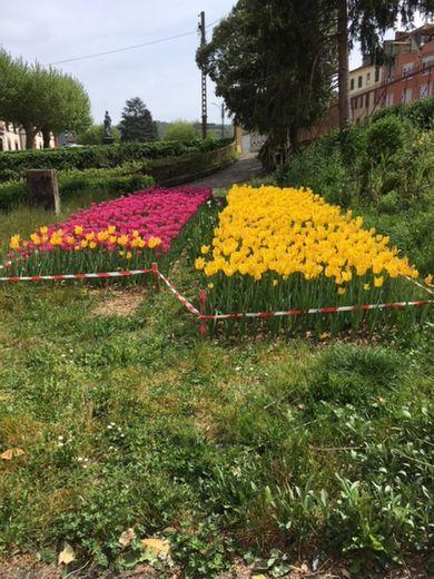 Les belles tulipes sont restées sur pied mais les dons se poursuivent auprès du Lions club.