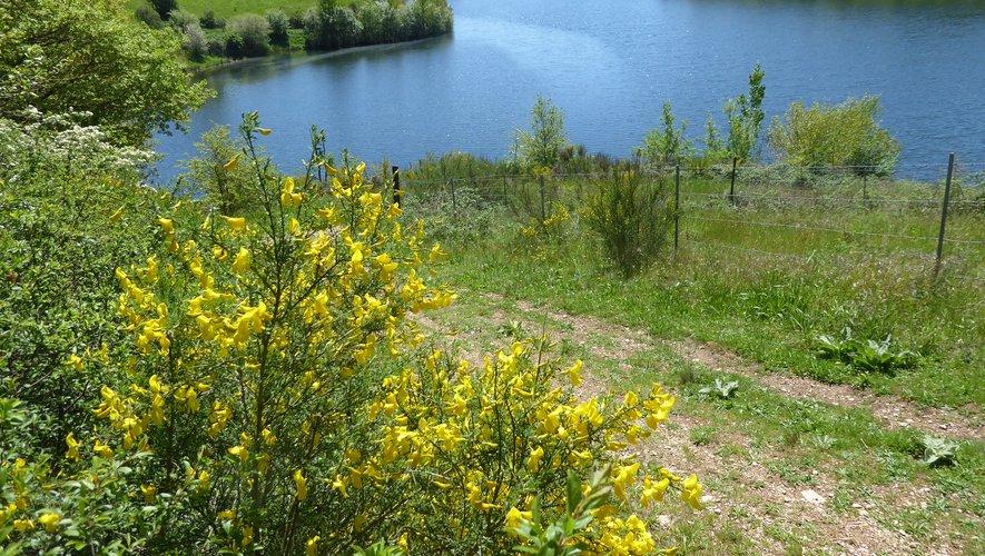 Le lac de la Brienne : un cadre exceptionnel de calme et de verdure.