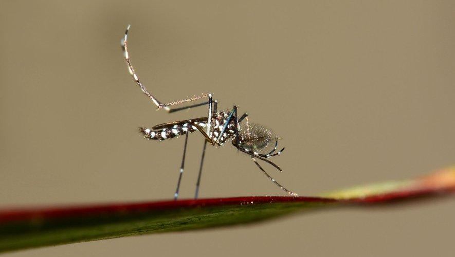 En France, le moustique tigre s'étend encore