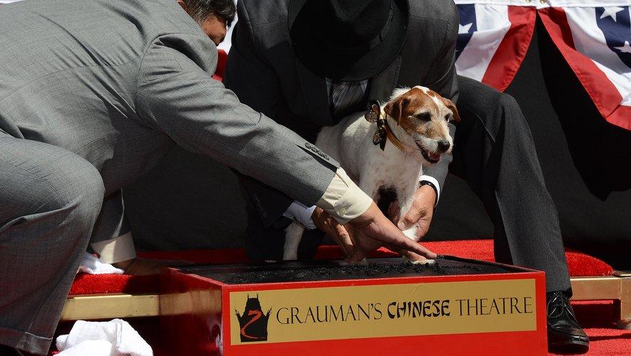 """le Jack Russel Uggie de """"The Artist"""" est devenu le meilleur interprète canin de ces vingt dernières années, en recevant, à titre posthume, la palme des Palm dog"""
