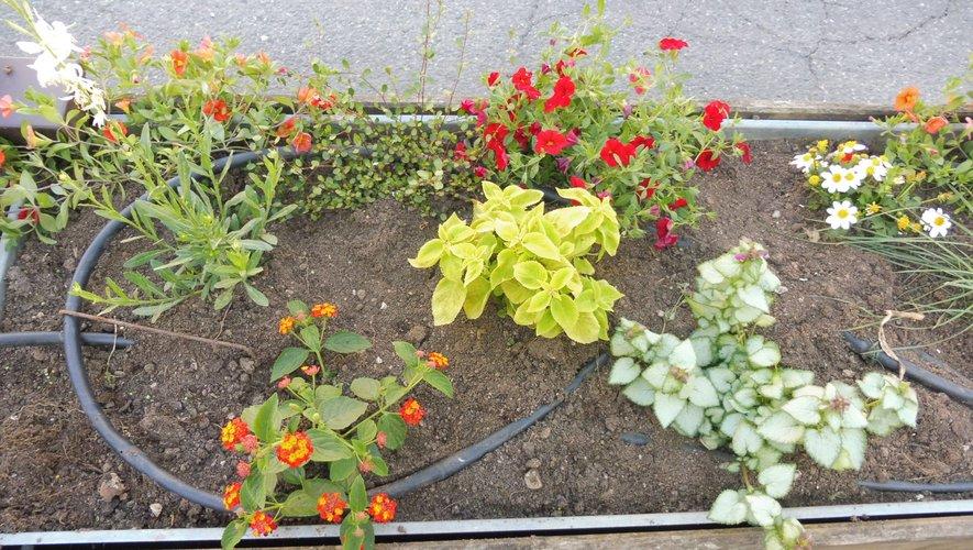 Des fleurs pour rendre la cité plus agréable