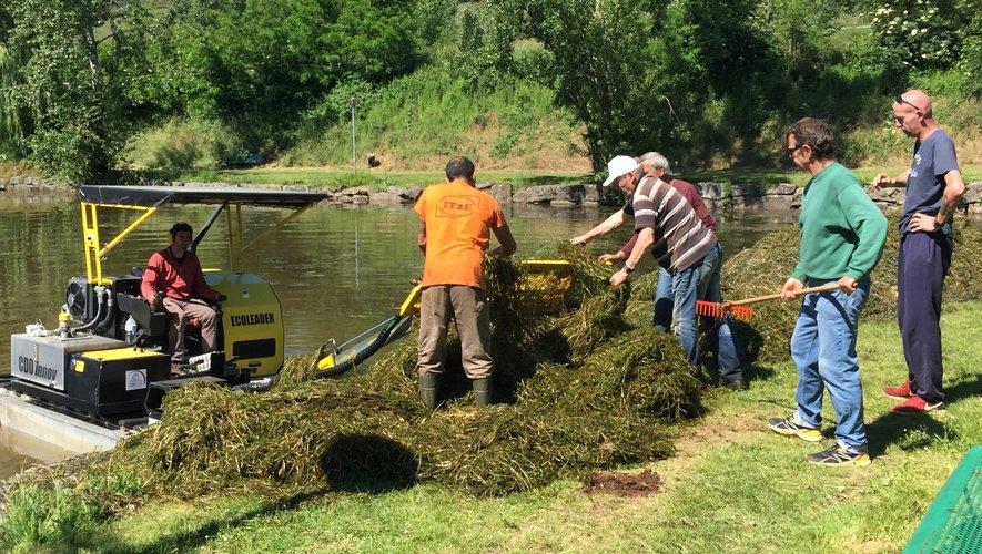 Les bénévoles de la société de pêche débarrassent les algues extraites du plan d'eau.
