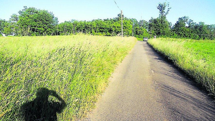 Les herbes envahissent tous les chemins.