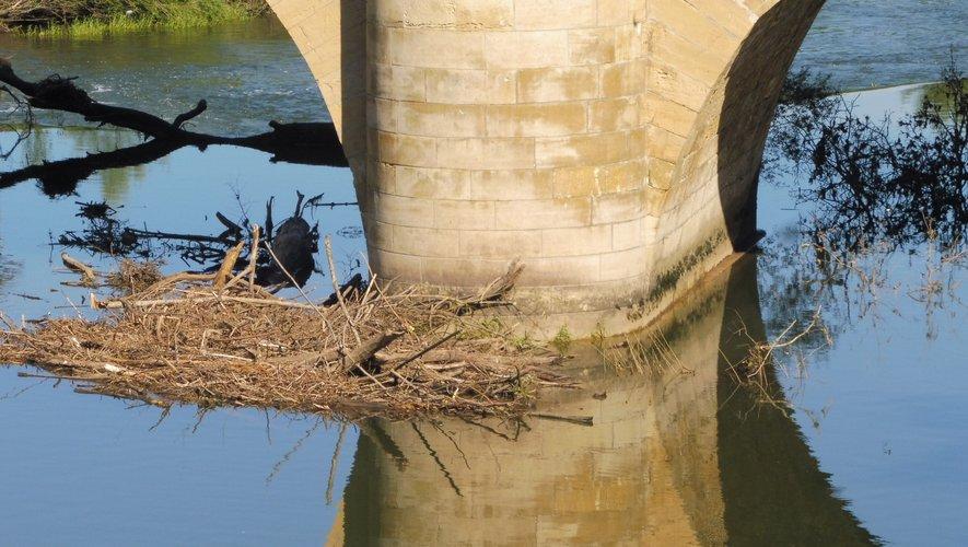 Des branches et arbres encombrent le lit  de la rivière