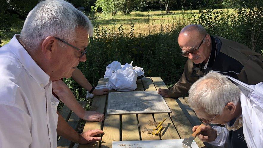 Jean-Pierre Mangé et ses amis apiculteurs observent les varroa pris au piège./Photo MCB