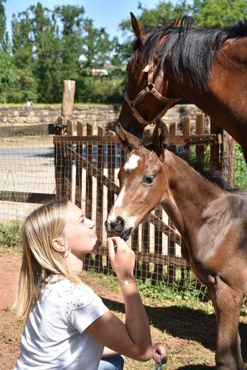 Pour la première fois, le centre équestre Lillhippus organise le concours de Foals