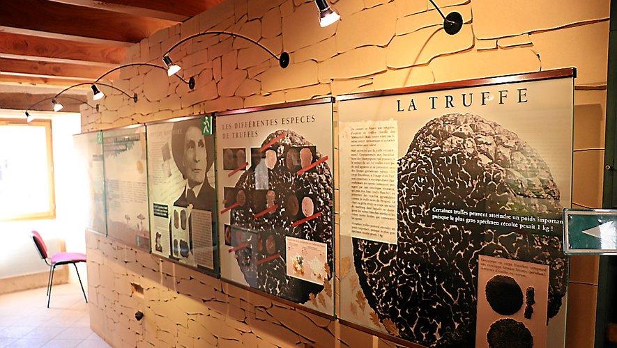 Les panneaux détaillent l'histoire et l'art de la culture de la truffe.
