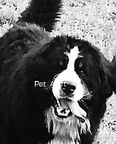 Le chien, un bouvier berlinois, est pucé et assez imposant.