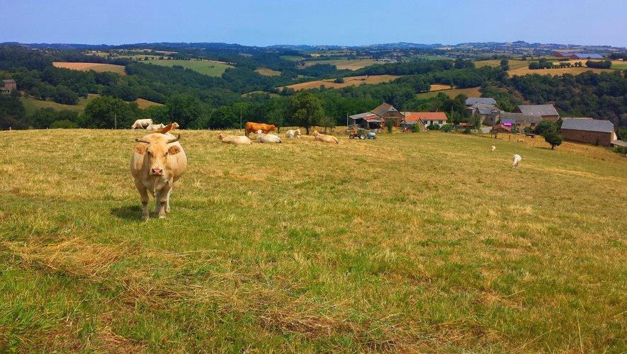 Autour du Cheval, des vaches.