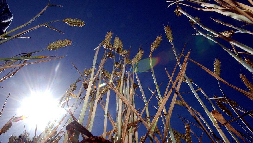 La sécheresse est visible dans les champs.