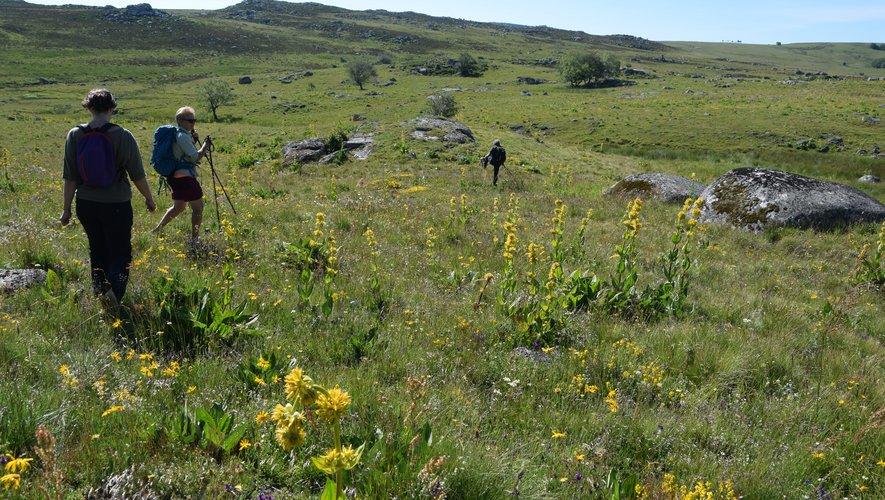 Les randonnées ont cartonné tout l'été sur l'Aubrac, terre des grands espaces.