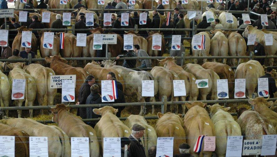 Les inscriptions sont ouvertes pour le concours des bœufs de Noël qui aura lieu le 5 décembre.
