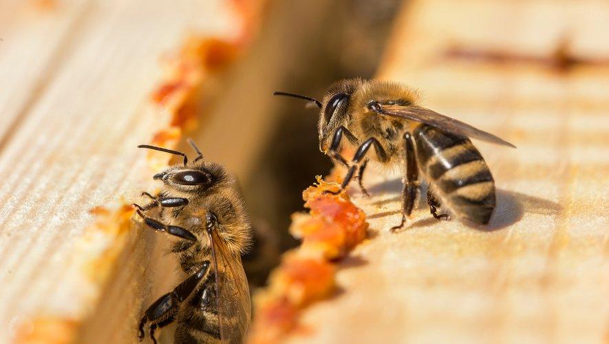 """Plus de 10% d'échantillons d'aliments d'origine végétale contrôlés en 2017 présentaient des traces de résidus de néonicotinoïdes, ces insecticides """"tueurs d'abeilles"""" controversés que le gouvernement veut réintroduire temporairement."""