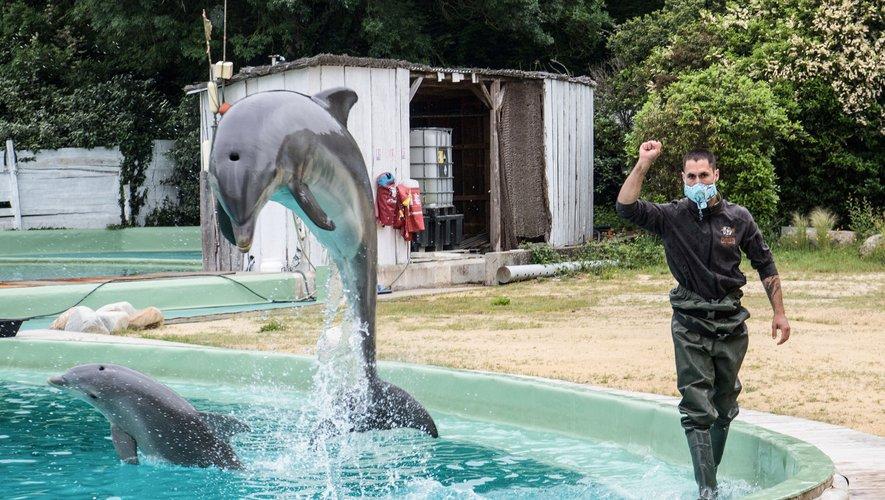 le gouvernement français a annoncé l'interdiction de la reproduction et de l'introduction de nouveaux orques et dauphins.